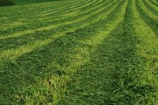 Free Field 3 Stock Photography - 2423032