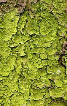 Free Bark Of A Fir Stock Photo - 2424590