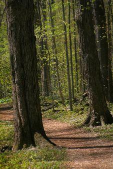Free Walkway Through Forest Stock Photos - 2428713