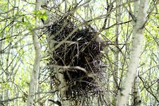 Free Crow-s Nest In The Woods Stock Photography - 2428902