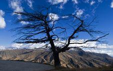 Free Tree Silhouette Stock Photos - 2429193