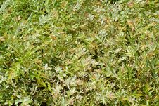 Free Green Leaves Texture Stock Images - 24200574