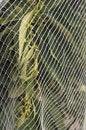 Free Orange Trees Under Netting Royalty Free Stock Photo - 24212465