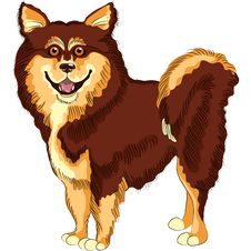 Free Vector Dog  Lapphund Breed Smiles Royalty Free Stock Photography - 24215617