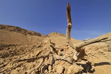 Judea Desert, Israel. Stock Photos