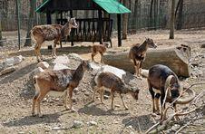Free Goat Near Shelter Royalty Free Stock Photography - 24220487