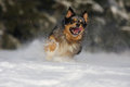 Free Dog Action In The Snow Royalty Free Stock Photos - 24233678