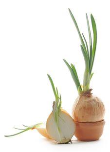 Free Green Onion Stock Photography - 24231182