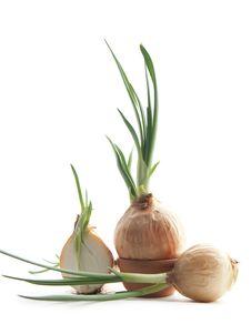 Free Green Onion Stock Photos - 24231183
