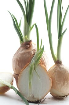 Free Green Onion Stock Photo - 24231190