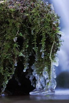 Free Frozen Moss Royalty Free Stock Photography - 24233547