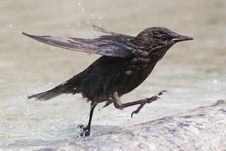 Free Fast Running Bird Stock Images - 24234514