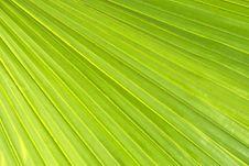 Free Green Leaf Royalty Free Stock Photo - 24236435