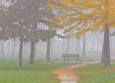 Mist And Yellow Tree Foliage In Autumn Royalty Free Stock Photo