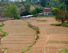 Free Farmland, Rural Royalty Free Stock Photography - 24239657