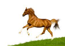 Free Chestnut Horse Isolated Stock Image - 24240141