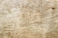 Free Wood Texture Background Royalty Free Stock Image - 24244126