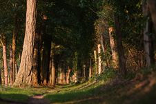 Free Forest Track Royalty Free Stock Photography - 24245467