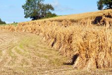 Free Landscape With Haystack Stock Image - 24246791