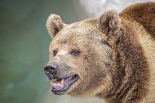 Free Brown Bear Stock Photo - 24247740