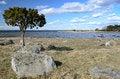 Free Single Tree On The Coast Stock Image - 24256531