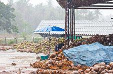 Free Coconut Factory Royalty Free Stock Photos - 24261488