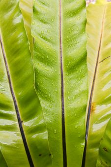 Green Leaf With Dew Royalty Free Stock Images