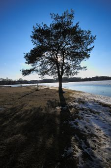 Free Tree Alone With Shadow Near Lake Stock Images - 24269324