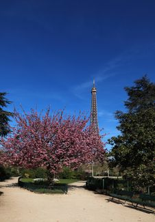 Free Spring In Paris Royalty Free Stock Photos - 24269928