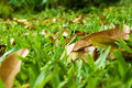 Free Leaves On Green Grass Royalty Free Stock Images - 24271139