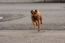Free Running Dog Royalty Free Stock Image - 24270346