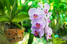 Free Purple Orchid Flower, Beautiful Royalty Free Stock Image - 24281206