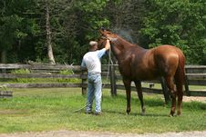 Free Chestnut Horse Having A Bath Stock Images - 24282894