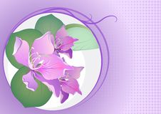 Free Beautiful Flowers On Pink Backdrop Stock Images - 24284144
