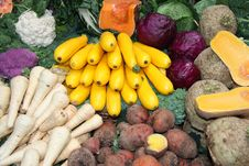 Freshly Picked Vegetables. Stock Images
