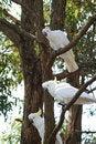 Free Three White Parrot Stock Photography - 2436062