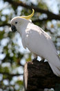 Free Parrot In Backlight Royalty Free Stock Photos - 2436108