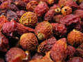 Free Dried Hips. Stock Image - 2438981