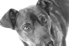 Free Dog With Sad Look Stock Photography - 2430382
