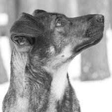Free Dog With Sad Look Stock Photos - 2430383