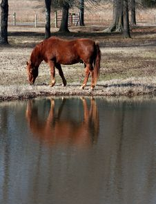Free Horses Reflection Stock Photo - 2432380