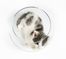 Free Kitten Playing In A Fishbowl Royalty Free Stock Photography - 2434517