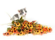 Free Gray And White Kitten Stock Photo - 2434550
