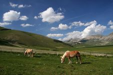 Horses With Landscape Royalty Free Stock Image