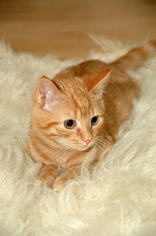 Free Cat Stock Photos - 2435583