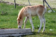 Free Foal Royalty Free Stock Image - 2435626