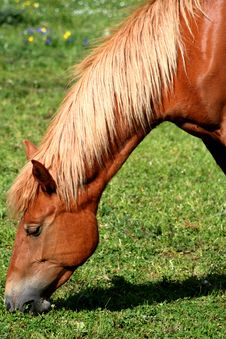 Free Horse Eating Grass / Detail Stock Photography - 2435722