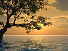 Free Old Tree Stock Photo - 2437220