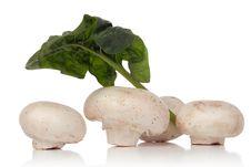 Free White Mushroom Stock Photography - 2439132