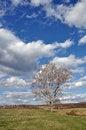 Free Tree Spring Stock Photo - 24300890